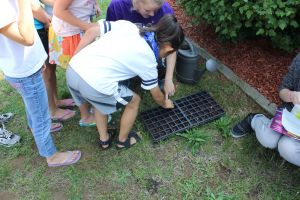 A group of children plant a flat of green bean seeds.
